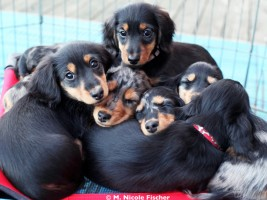 Puppies-bunch 2014