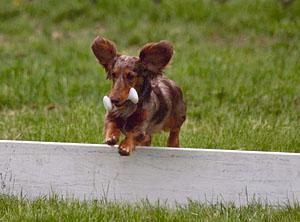 Bailey Jumping