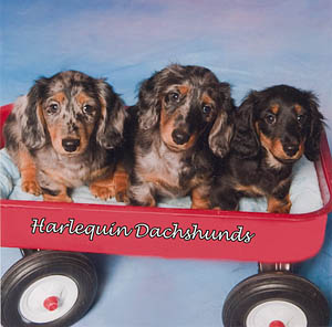 puppies in wagon